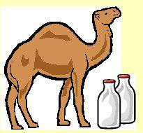 camelmilk.jpg