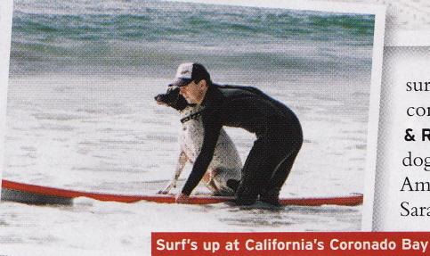 dogsurfinglessons.jpg