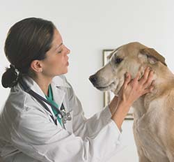 Veterinary Medicine best colleges for future writers