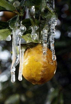 orangeice