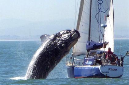 whaleyacht